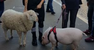 Rome pets: Hansel the lamb and Dior the piglet