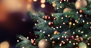 Where to buy Christmas trees in Rome