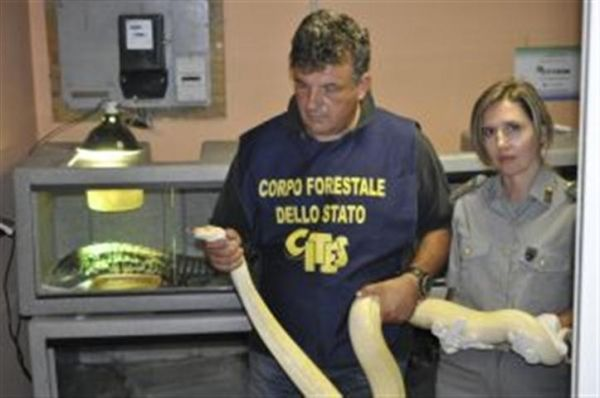 Rome police find 50 snakes and reptiles in car
