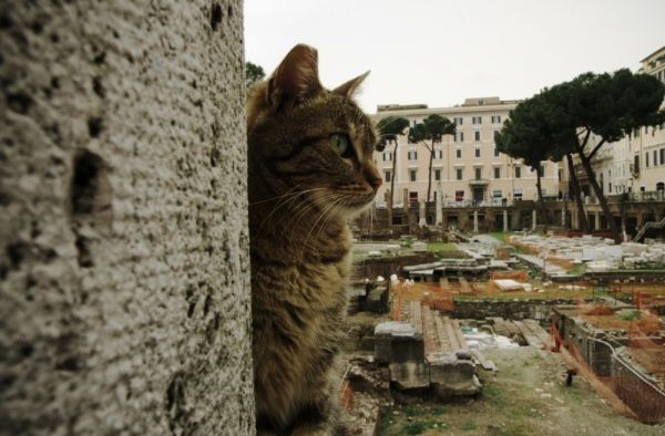 Rome cat sanctuary gets eviction order