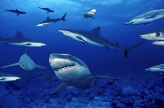 Sharklife