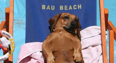 Rome's dog-friendly beach reopens