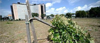 Vandals destroy 60 trees in Garbatella park