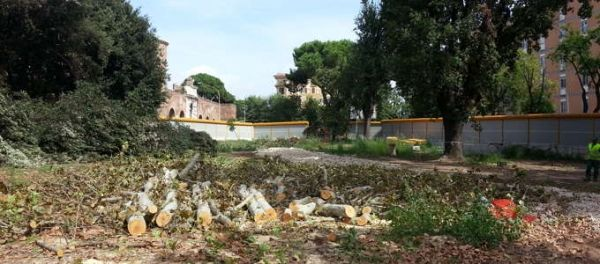 Tree felling causes protests in Rome
