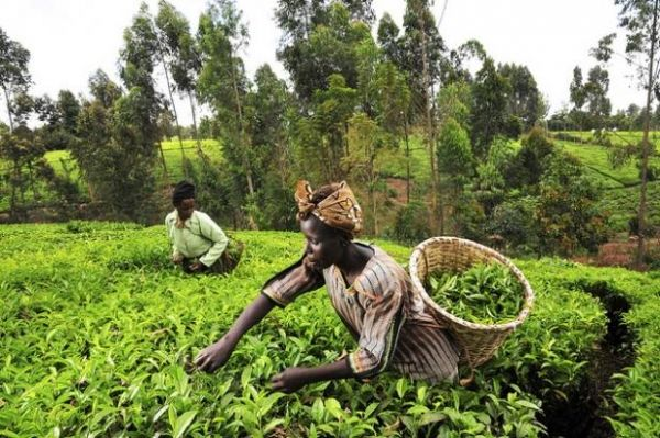 FAO reports progress in eradicating hunger