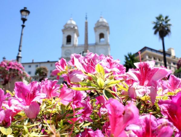 Rome's Spanish Steps in full bloom