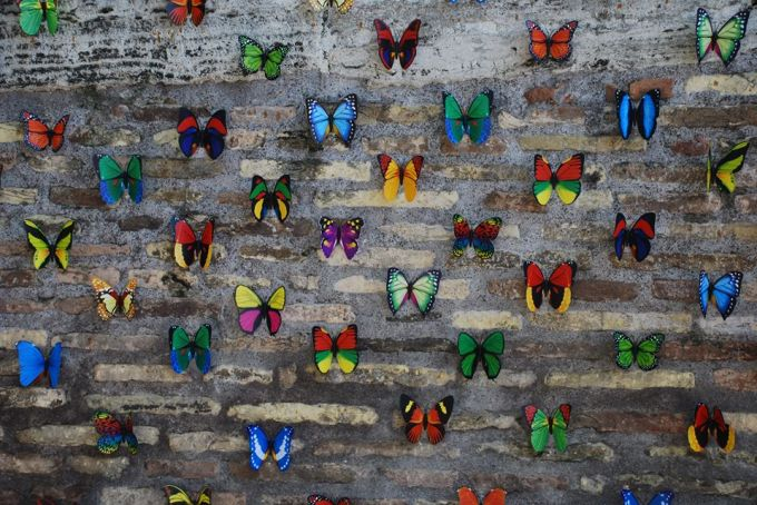 Butterflies on Tiber Island