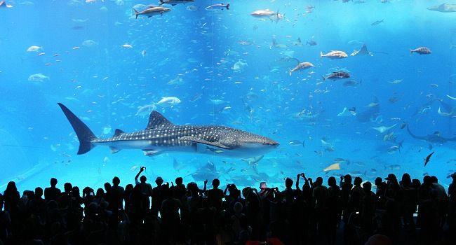 Rome Aquarium to open in spring