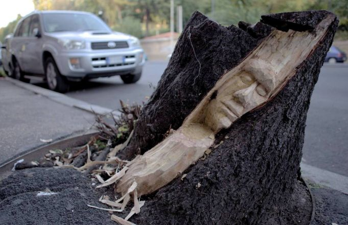 New life for Rome's tree stumps