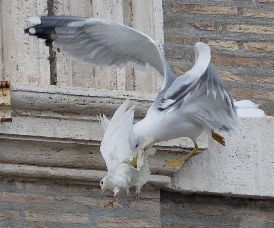 A gull attacks one of the pope's peace doves.