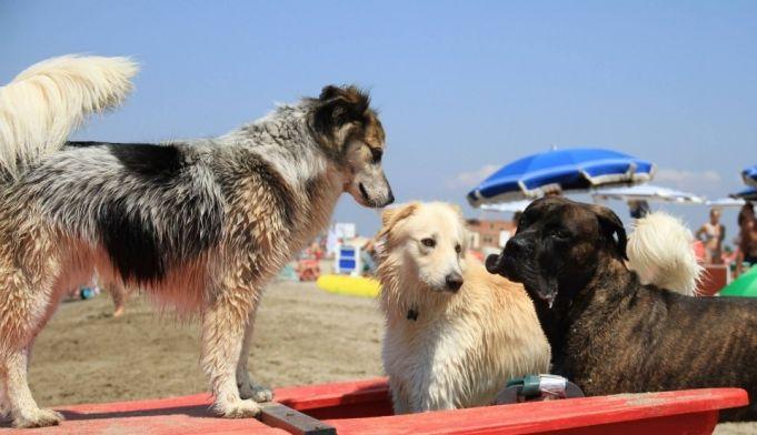 Rome's dog-friendly beach