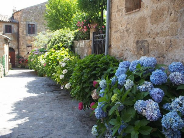 Hydrangeas spill out over the town well-kept winding lanes.