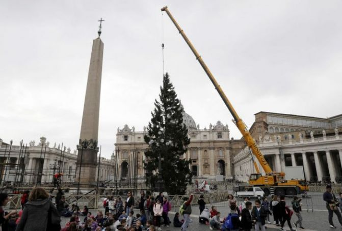 Vatican Christmas tree to be lit up on 9 December