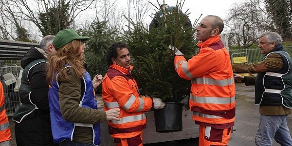 Recycling Christmas trees in Rome