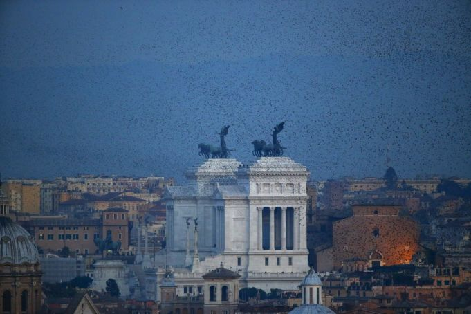 A flock of starlings flies in the dusk sky over Rome, Italy