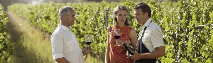 Wine Tasting, vineyard tour and lunch in Frascati