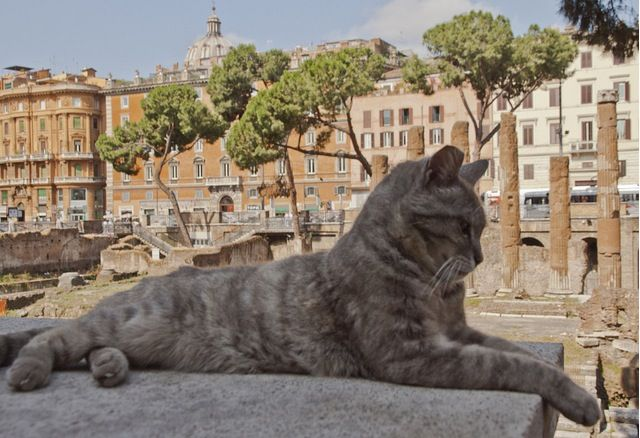 Rome's cat sanctuary
