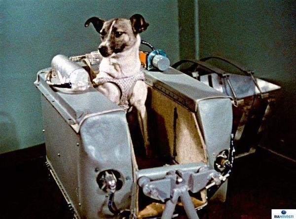 Laika - 3 November 1957