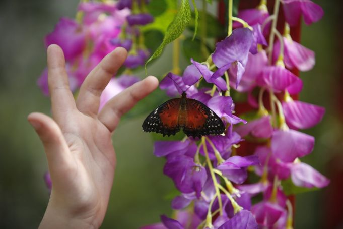 Rome's butterfly house