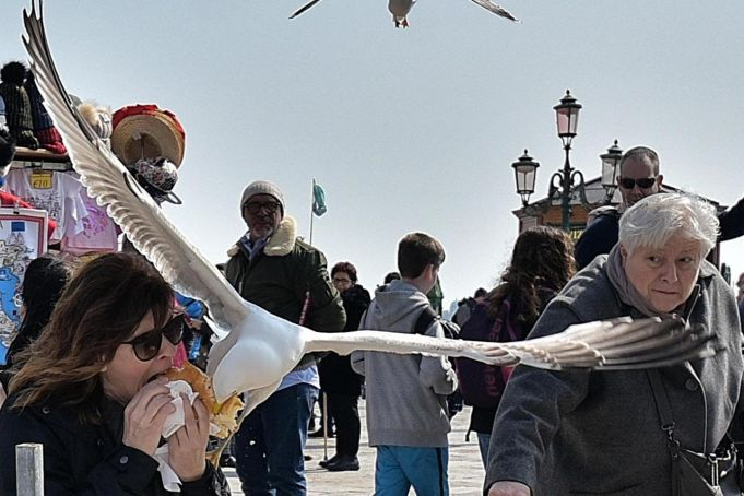 Easter seagull in Venice