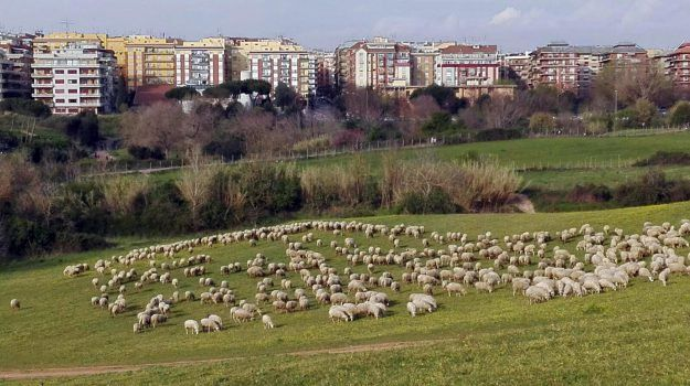 Cows and sheep to tackle Rome's overgrown parks