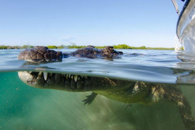 Rome police investigate alleged crocodile sightings