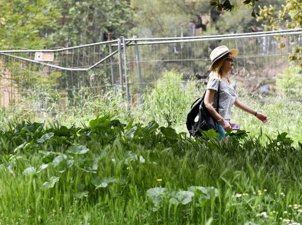 Rome uncovers absenteeism among city gardeners