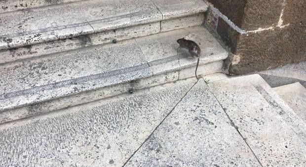 Rats in Rome city hall