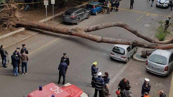 Fallen tree closes Rome's Viale Mazzini