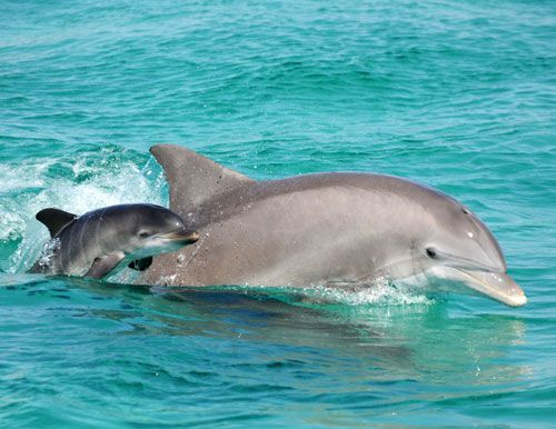 Baby dolphin sighted off Rome coast