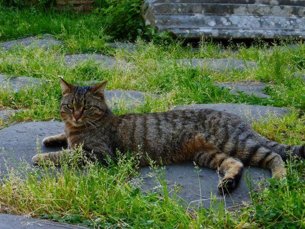 Cat sanctuary at Rome's pyramid