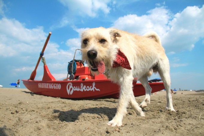 Baubeach: Rome's eco-friendly beach for dogs
