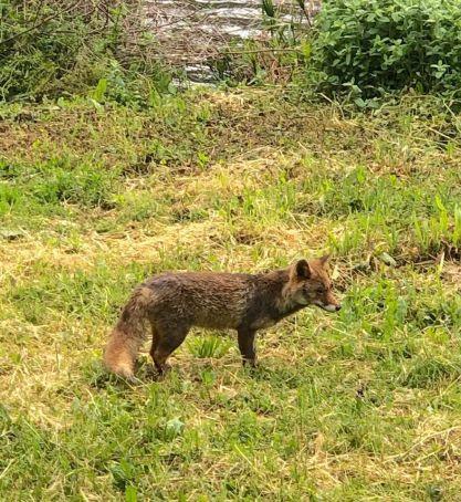 Spotted in Villa Pamphili