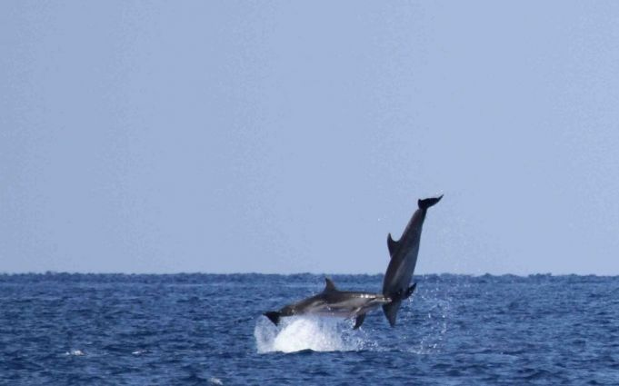 Dolphins jumping off Rome's coast