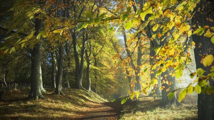 Lazio Region to plant six million trees