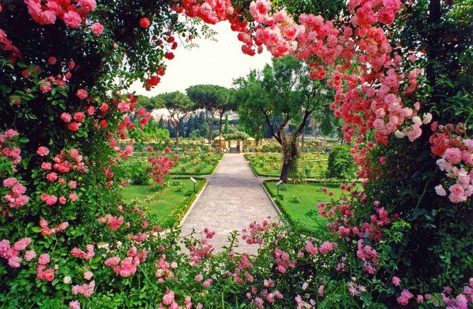 The story of Rome's rose garden