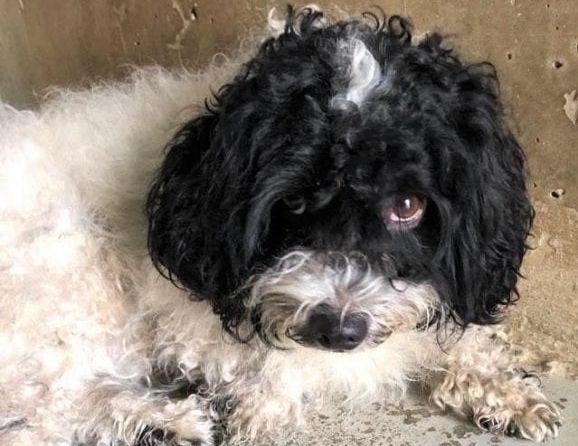Dog abandoned on Rome bus: adoption appeal