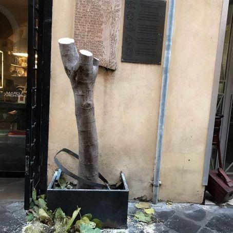 Rome: Via Margutta loses its landmark fig tree