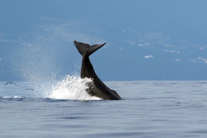 Italy: Whales swim in ship-free Strait of Messina