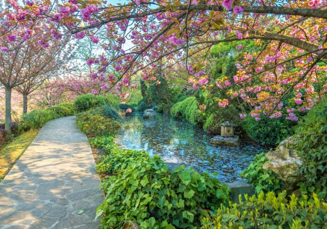 Rome's Botanic Garden: a semi-forgotten wonder