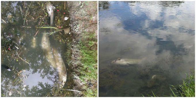 Alarm as hundreds of fish die in Rome's river Tiber