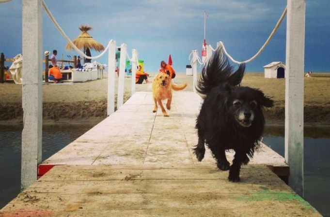 Rome's beach for dogs reopens