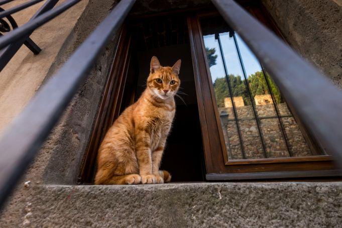 Italy: cat dies from mystery bat virus in Arezzo
