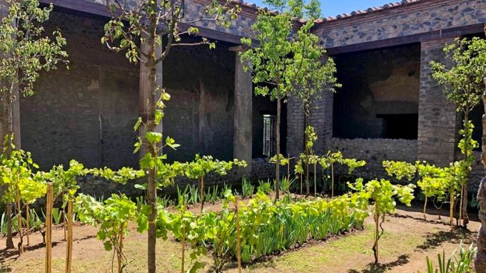 Pompeii's lost gardens bloom again
