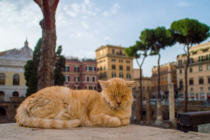 Rome's cat sanctuary among the ruins