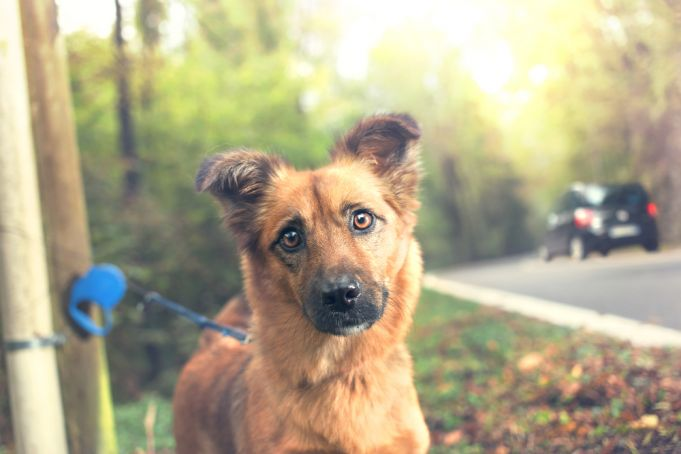 Rome residents urged not to abandon pets over summer holidays