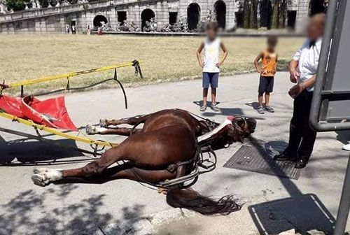Italy: Royal Palace of Caserta bans horse-drawn carriages after horse's death