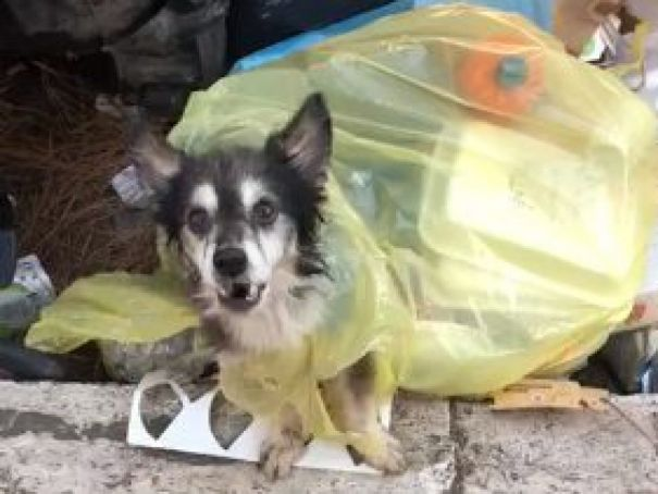 Rome: a happy end for Spillo, the old dog dumped in the trash