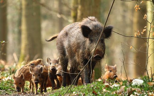 Rome mayor orders inquiry into wild boar killing in kids playground