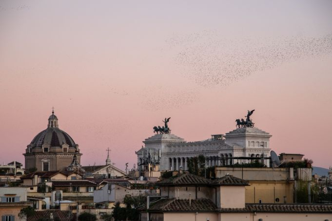 Rome's starlings: kinetic artists or urban pests?
